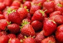 Erdbeeren – aber bitte mit Sahne!